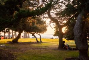 Torrey-Pine-Trees-300x203