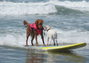 HELEN WOODWARD ANIMAL CENTER SURF DOG SURF-A-THON